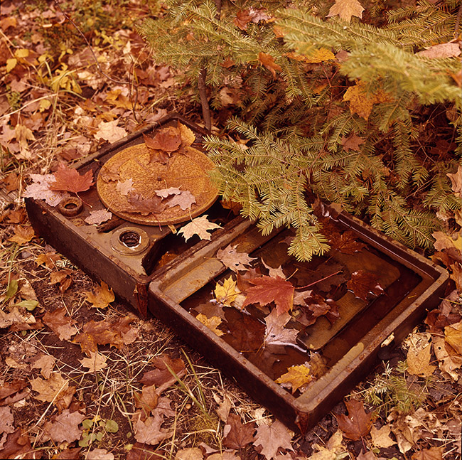 Record Player in Leaves