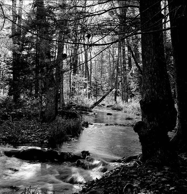 Stream through Woods